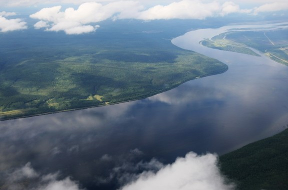 Анагарская сосна произростает в бассейне реки Ангара